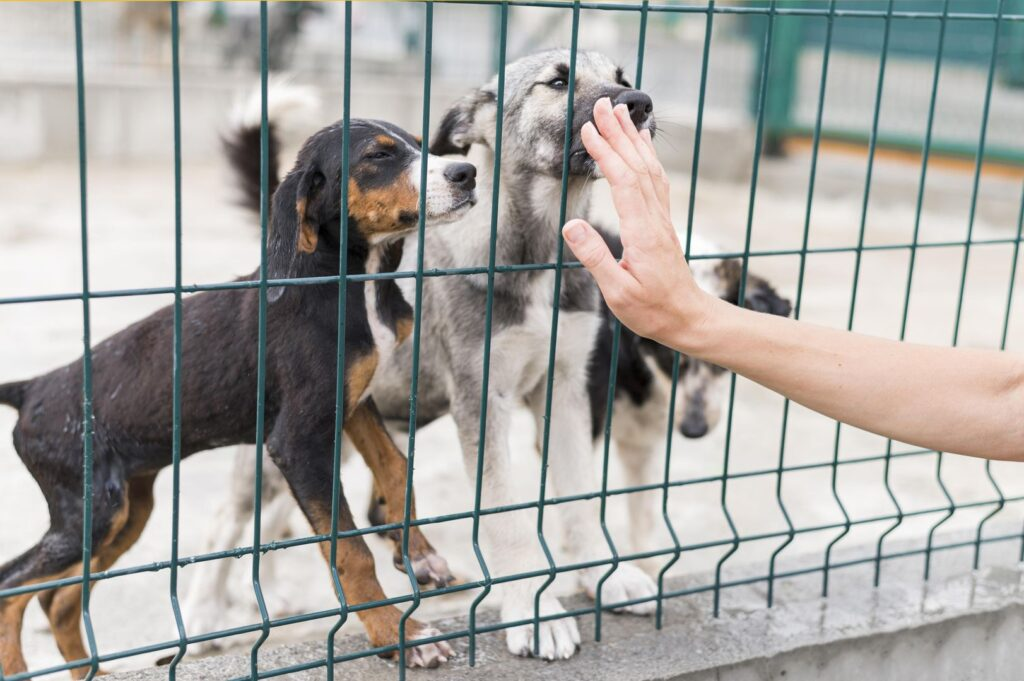 rescue-dogs-being-happy-someone-came-to-see-them-at-shelter_wynik